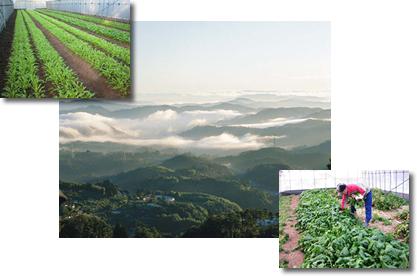 弥高山周辺の農業