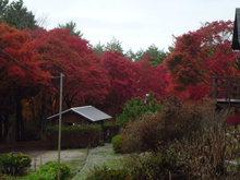 弥高山の紅葉